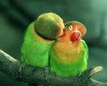 bird-love